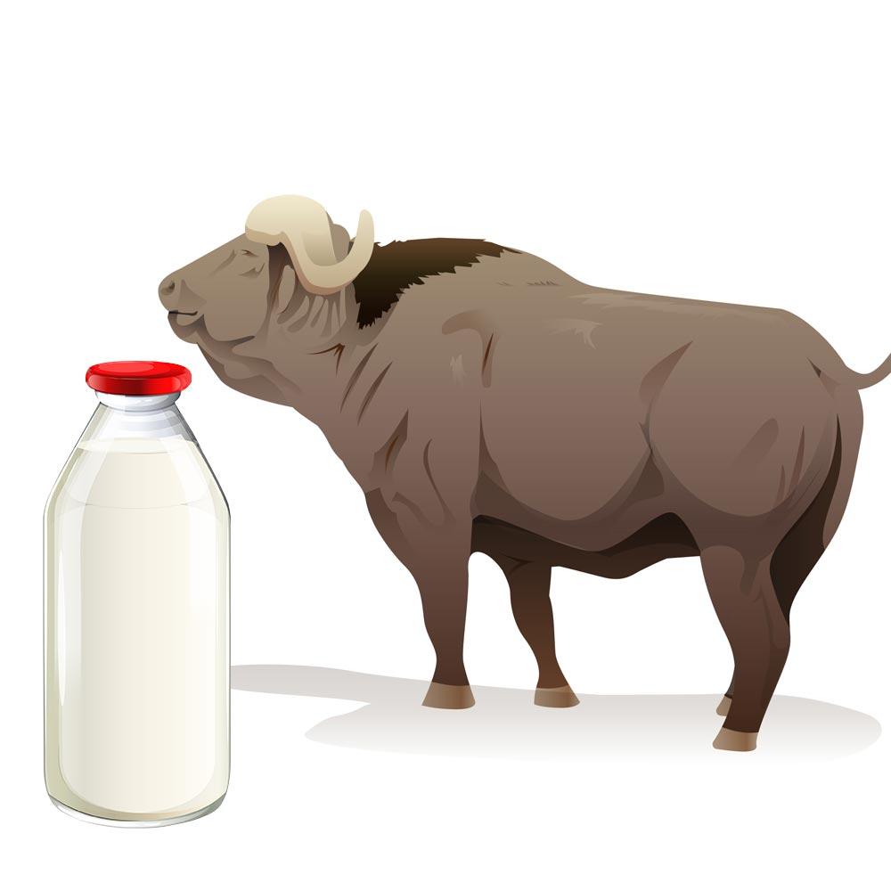 Lapte de bivoliță