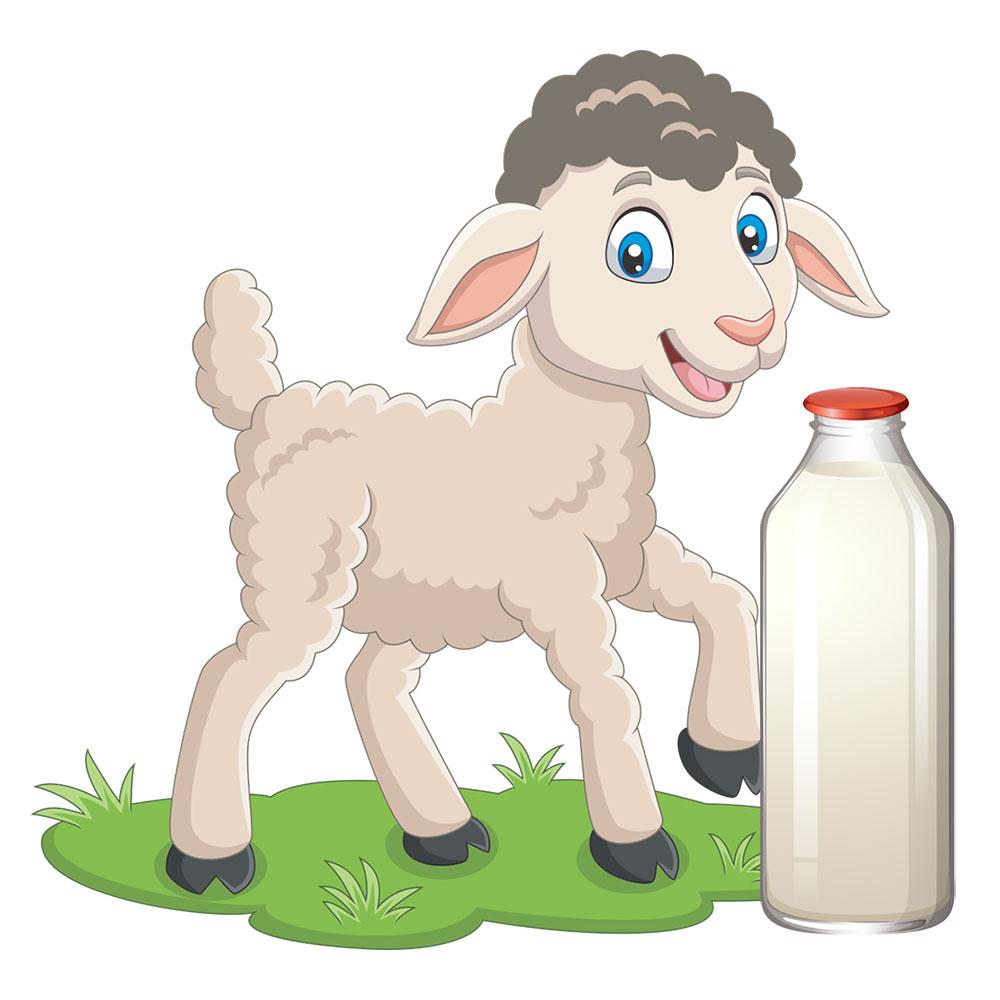 Lapte de oaie